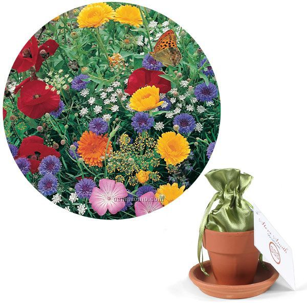 Butterfly Seed Mix In Satin Bag, Terracotta Pot & Saucer With 4 Color Tag