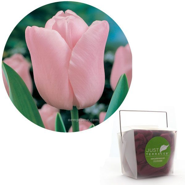 1 Pink Tulip Bulb In A Take-out Box With Tissue And Custom 4-color Label