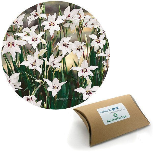 Eight (8) Orchid Glad Bulbs In A Kraft Pillow Box With 4-color Label