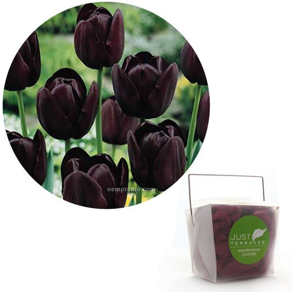 Single Tulip Bulb In Take Out Box With Custom 4-color Label
