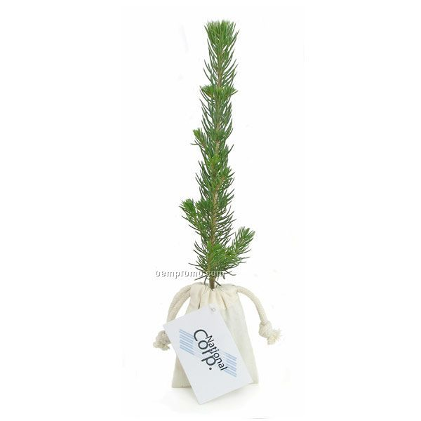 Blue Spruce Evergreen Tree Plug In Natural Cotton Bag W/4 Color Hang Tag