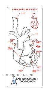 Medical Illustrator (Heart)