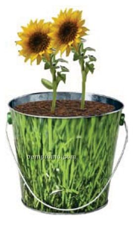 Tin Bucket With Soil And Seeds