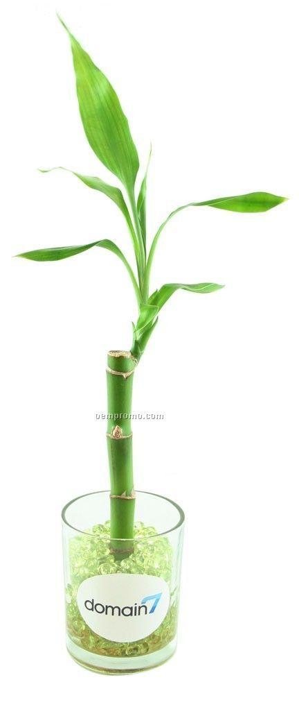 Lucky Bamboo In Glass Vase Wgreen Acrylic Beadschina Wholesale