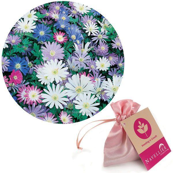 15 Anemone Blanda Bulbs In Satin Bag With Custom 4-color Tag