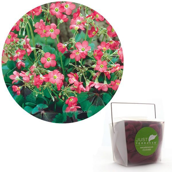 Twenty-five (25) Shamrock Bulbs In Take-out Box With 4-color Label