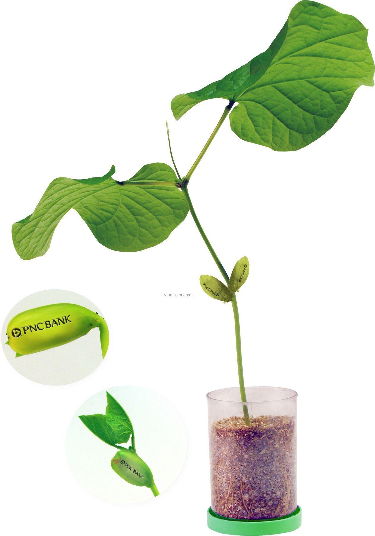 Logo Bean,China Wholesale Logo Bean