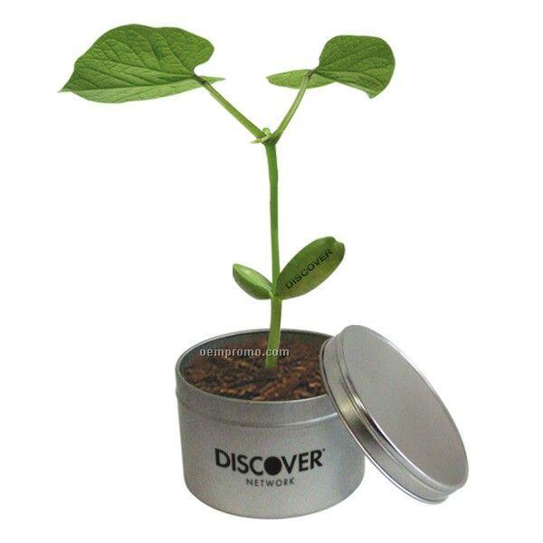 The Magic Bean Tin Can