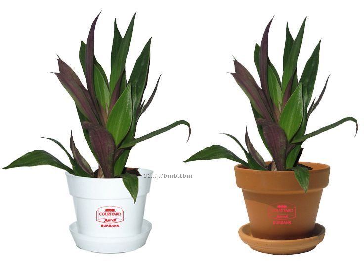 Tropical Plant / Moses In Pot