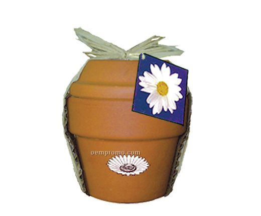 Deluxe Plant Kit With Daisy Seeds