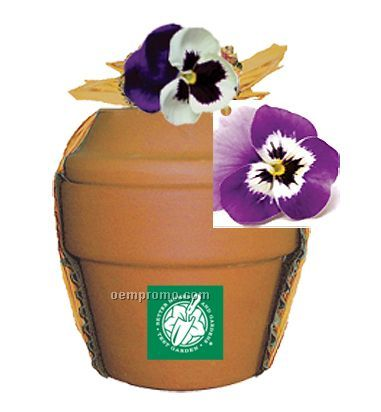 Deluxe Plant Kit With Pansy Seeds