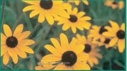 Business Card Series Black-eyed Susan Flower Seeds