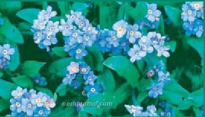Business Card Series Blue Forget-me-not Flower Seeds