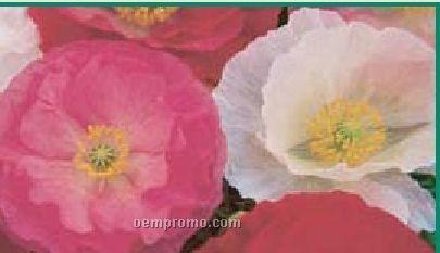 Business Card Series Shirley Poppy Flower Seeds