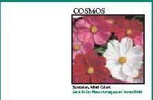 Impression Series Cosmos Flower Seeds