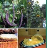 Collection Series Wild Weird & Wacky Garden / Flower Seeds