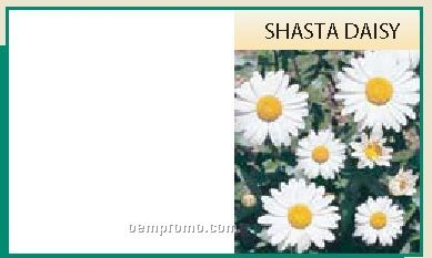 Mailable Series Shasta Daisy Flower Seeds