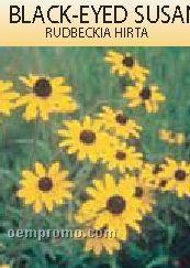 Standard Series Black Eyed Susan Seeds - 1 Color