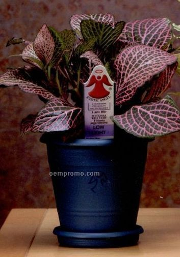 Angel plant 4 4 pot china wholesale angel plant 4 4 pot for How to take care of exotic angel plants