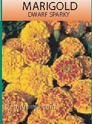 Standard Series Marigold Seeds - 1 Color