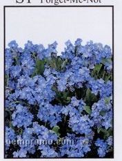 Forget-me-not Simply Floral Seed Packets - Imprinted