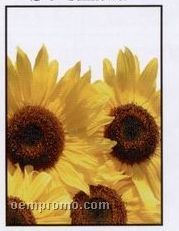 Sunflower Simply Floral Seed Packets - Imprinted