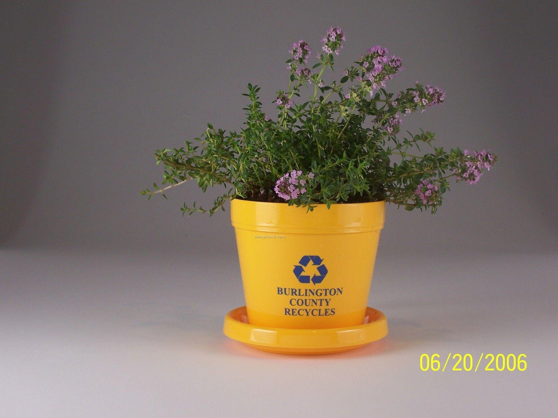 Winter Thyme Mini Logo Planter Kit (No Imprint)