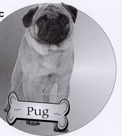 Pug Dog Acrylic Coaster W/ Felt Back