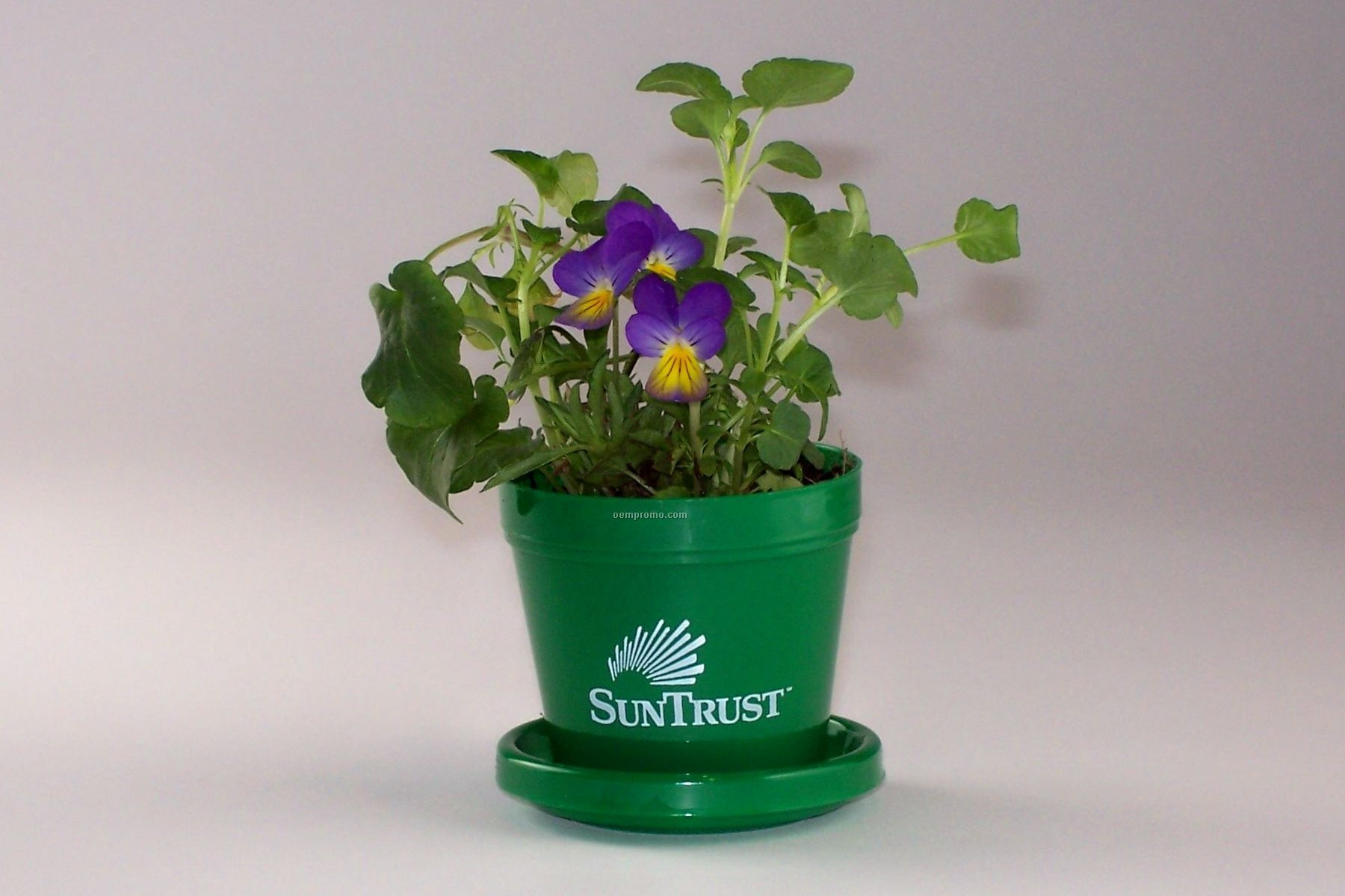 Johnny Jump Up Standard Logo Planter Kit (1 Color)