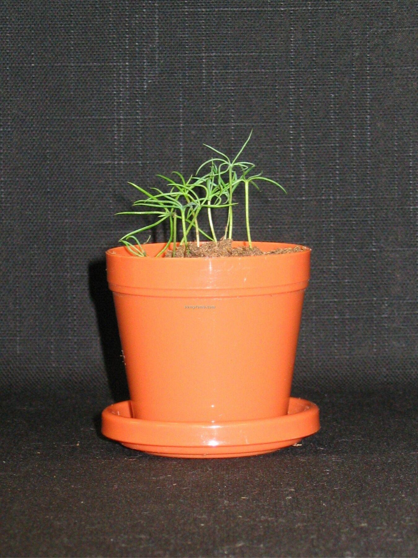 Colorado Blue Spruce Mini Logo Planter Kit (No Imprint)