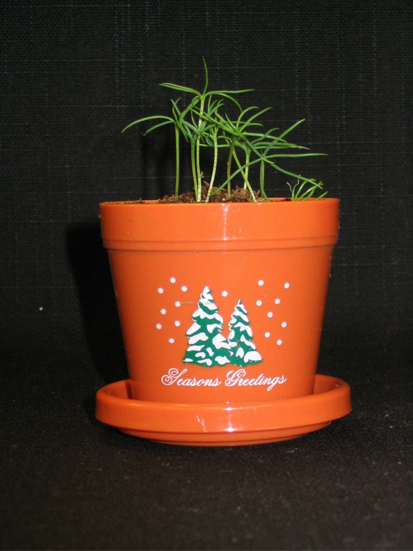 Colorado Spruce Mini Logo Planter Kit (2 Color Imprint)