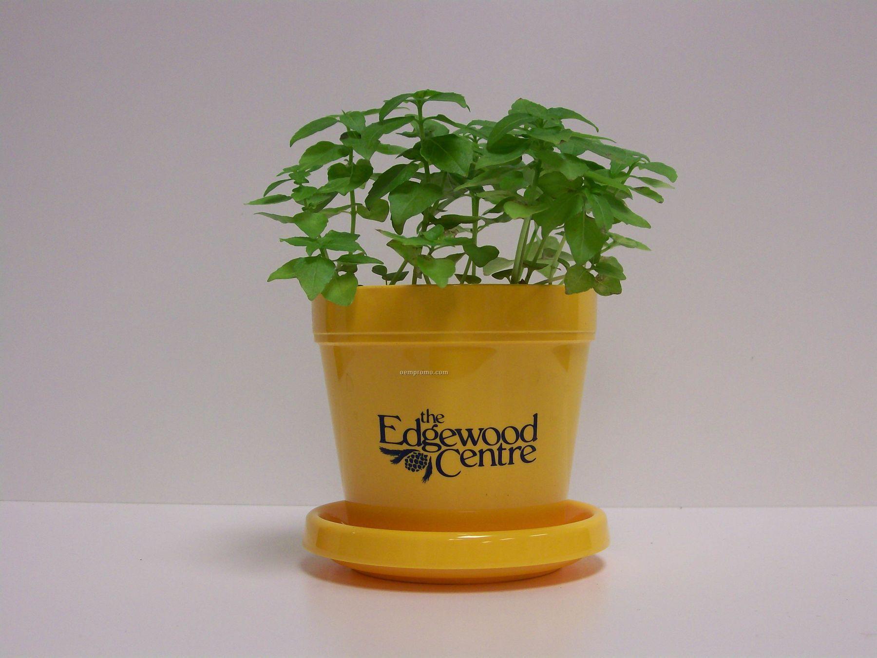 Basil (Dwarf Greek) Standard Logo Planter Herb Kit (1 Color)