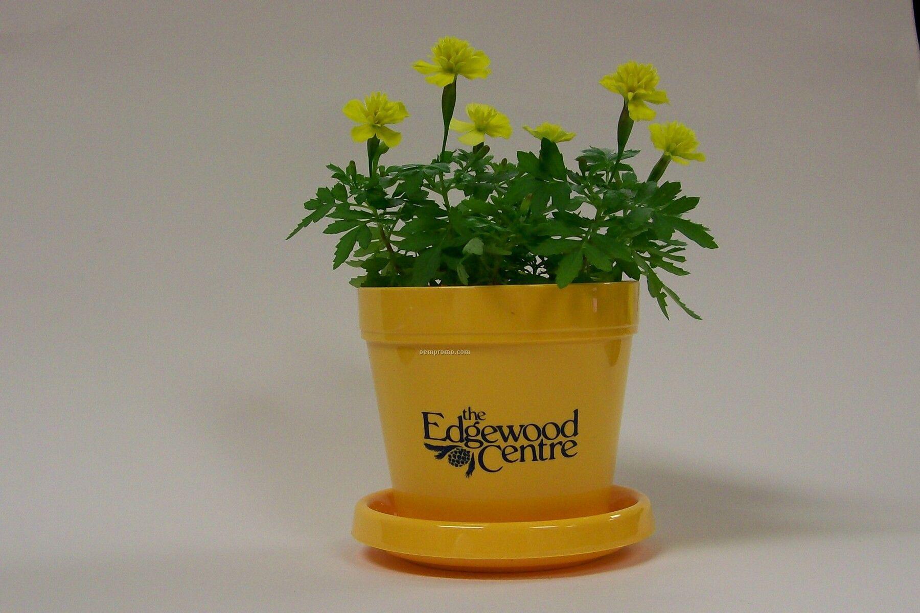 Marigold Lemon Drop Mini Logo Planter Kit (1 Color Imprint)