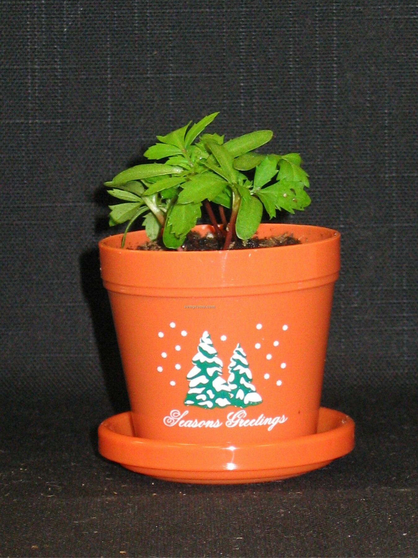 Marigold Lemon Drop Mini Logo Planter Kit (2 Color Imprint)