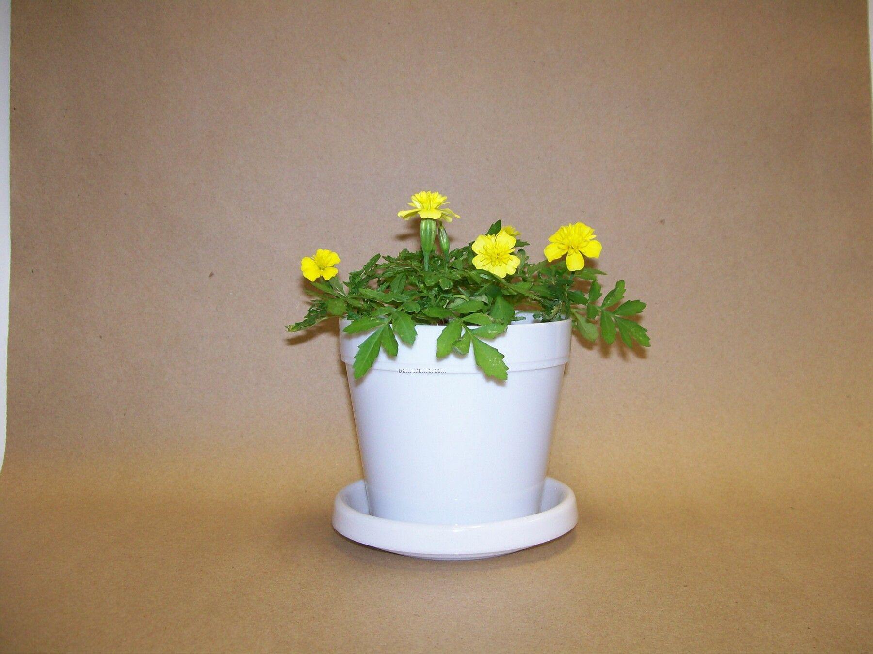 Marigold Lemon Drop Standard Logo Planter Kit (No Imprint)