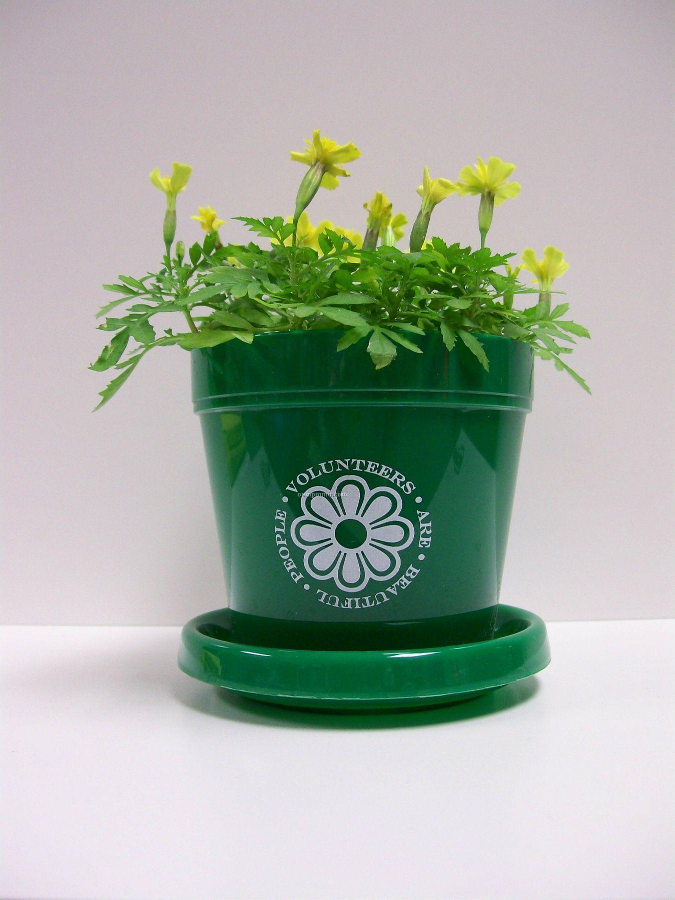 Marigold Lemon Drop Mini Logo Planter Kit (No Imprint)