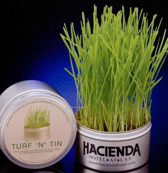 "Turf ""N"" Tin 16 Oz. Wheat Grass Growing Tin"