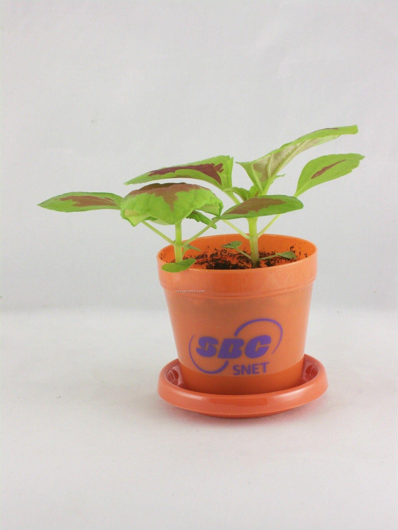 Coleus Rainbow Mixed Mini Logo Planter Kit (1 Color)