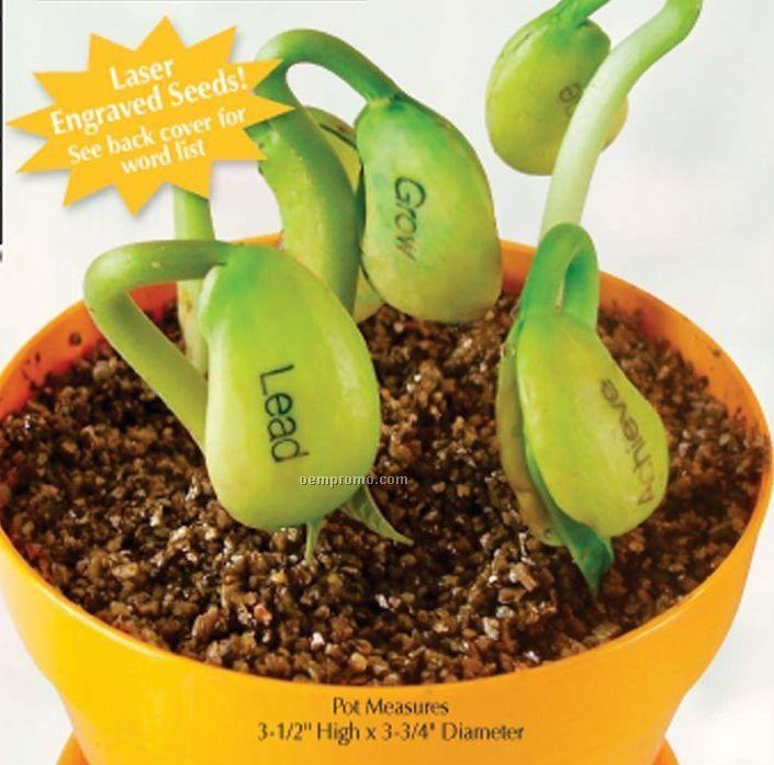 Magic Bean Planter Kits (No Imprint)