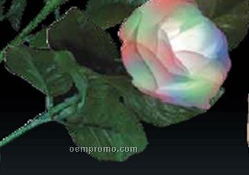 Light Up Multicolor Rose