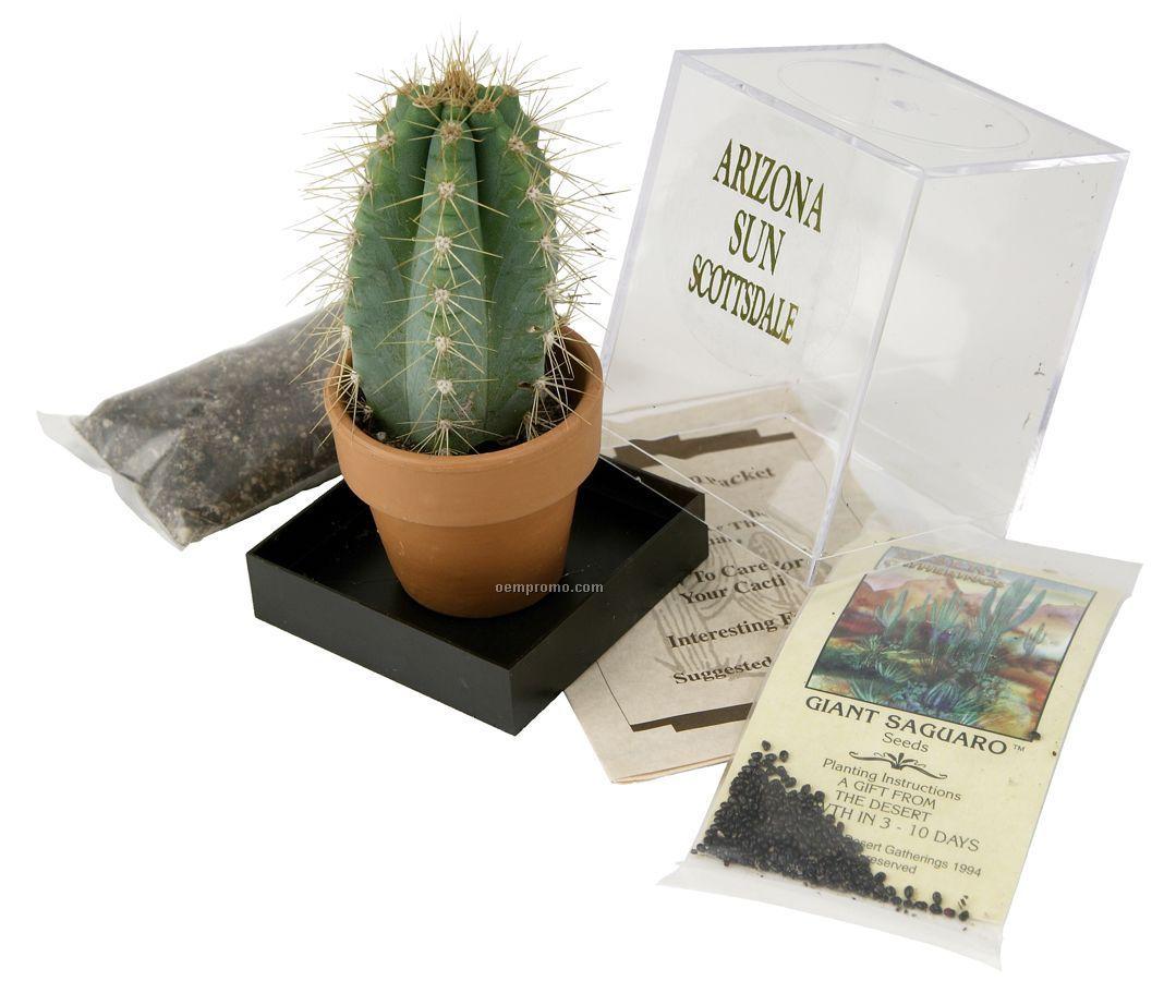 Saguaro Cactus Incubator Kit