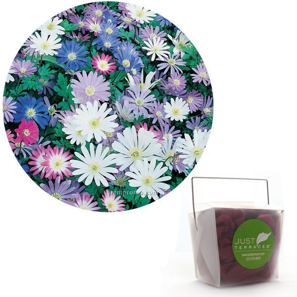 15 Anemone Blanda Bulbs In Take-out Box With Custom 4-color Label