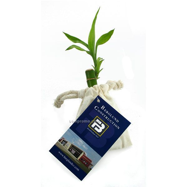 """4"""" Lucky Bamboo Stalk In Natural Cotton Bag With Custom 4-color Hang Tag"""