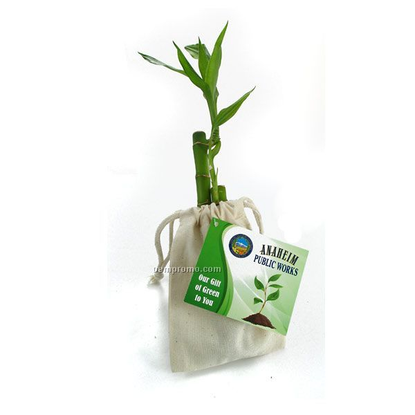 "6"" Lucky Bamboo Stalk In Natural Cotton Bag With Custom 4-color Hang Tag"