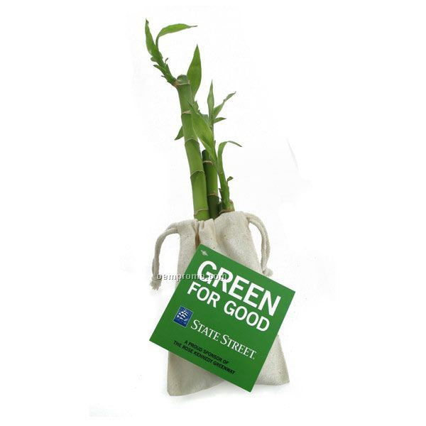 """Triple Luck Bamboo-three Stalks (6"""", 8"""" & 12"""") In A Cotton Bag With 4-c Tag"""