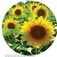 Tin With Sunflower Seeds