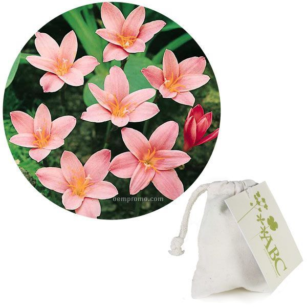 Five (5) Fairy Lily Bulbs In A Natural Cotton Bag With 4-color Tag
