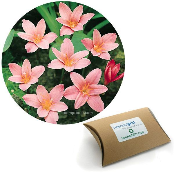 Five (5) Fairy Lily Bulbs In A Kraft Pillow Box W/4-color Label