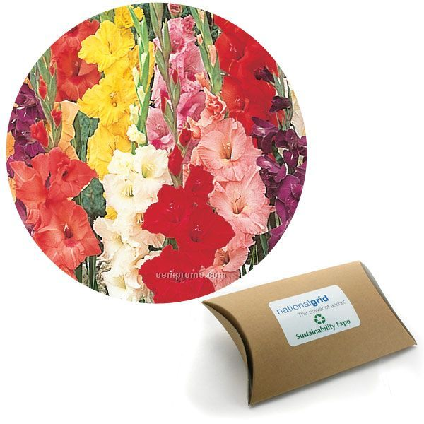 Five (5) Gladiolus Bulbs In Pillow Box With 4 Color Label